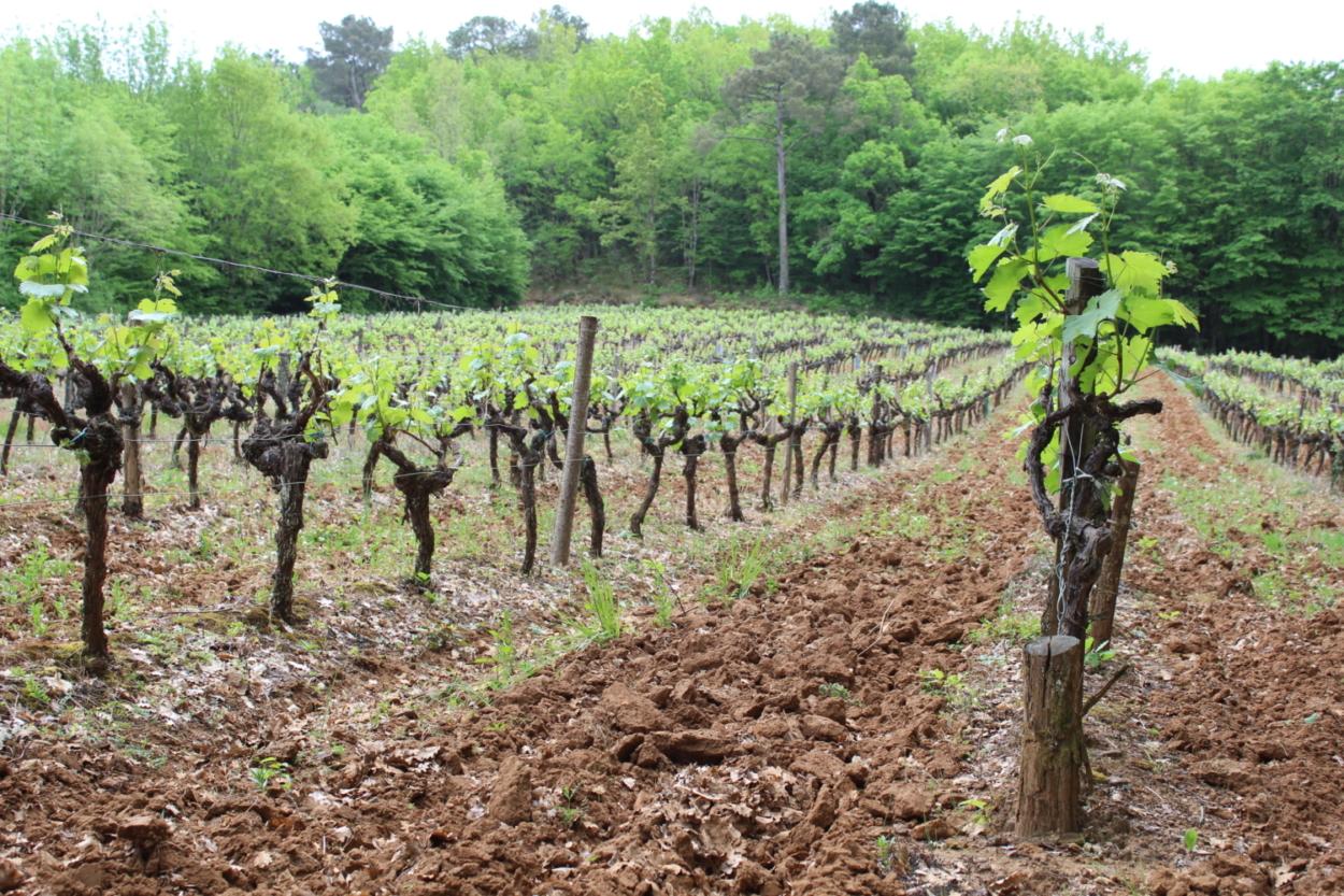 Wijngaard achter hole 6 van buurman Maurice